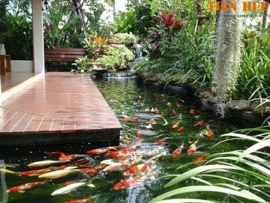 Tổng hợp đầy đủ nhất về thiết kế và thi công hồ cá Koi sân vườn đẹp
